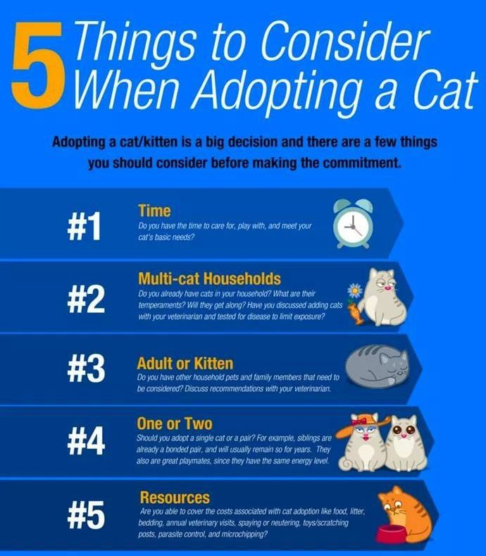 Things to now about Adopting a Cat